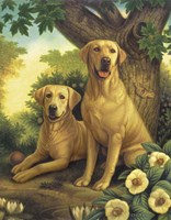 Yellow Labs Fine Art Print