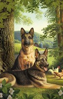 German Shepards/Chicken Fine Art Print
