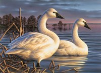 Evening Tundras Fine Art Print