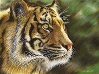 Into The Jungle Fine Art Print