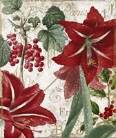 Amaryllis Fine Art Print