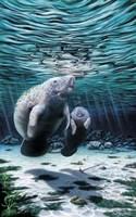 Mermaids Of Crystal River Fine Art Print