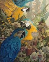 Amazon Fine Art Print