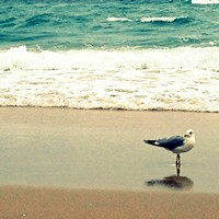 Seagull on Beach Fine Art Print