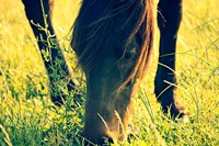 Horse in the Meadow I Fine Art Print