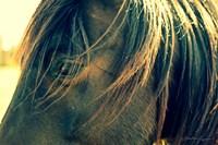 Horse in the Meadow II Fine Art Print