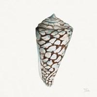 Modern Shell with Teal II Fine Art Print