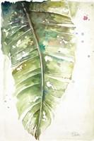 Watercolor Plantain Leaves I Fine Art Print
