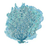 Teal Coral on White II Fine Art Print