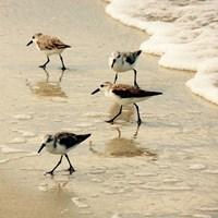 Birds of the Shore Square II Fine Art Print