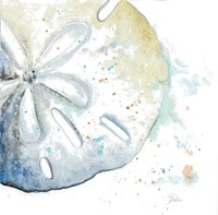 Water Sand Dollar Fine Art Print