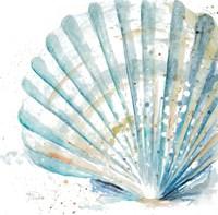 Water Shell Fine Art Print