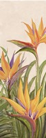 Bird of Paradise Panel II Fine Art Print