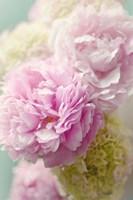 Soft Pink Blooms Fine Art Print