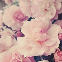 Pink Blossoms I Fine Art Print