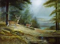 Mountaintop Retreat Fine Art Print