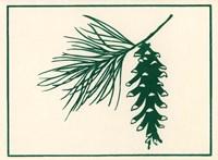 Green Pine Fine Art Print