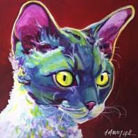 Cat - Devon Rex Fine Art Print