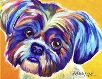 Shih Tzu - Lacey Fine Art Print