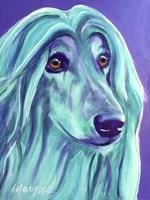 Afghan Hound - Aqua Fine Art Print