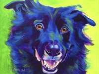 Border Collie - Viktor Fine Art Print