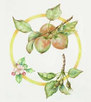 Apple Cycle Fine Art Print