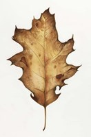 Black Oak Leaf Fine Art Print