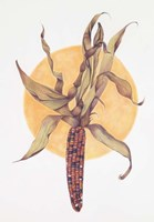 Indian Corn Fine Art Print