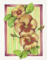 Pansies Fine Art Print