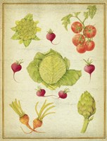 Les Beaux Legumes (The Beautiful Vegetables) Vintage Fine Art Print