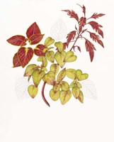 Coleus Collage Fine Art Print
