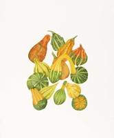 Heirloom Gourds Fine Art Print
