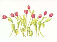 Nine Tulips Twirling Fine Art Print