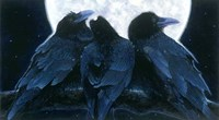 Corvus Moon Fine Art Print