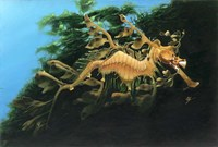 Leafly Sea Dragon Fine Art Print