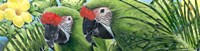 Military Macaws Fine Art Print