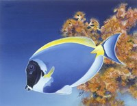 Powder Blue Tang Fine Art Print