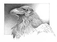 Ravens Head Fine Art Print
