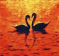 Swan LIV Fine Art Print