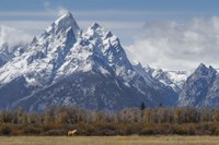 A Horse In Front Of The Grand Teton Fine Art Print