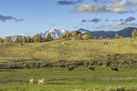 Lamar Valley - Pronghorn And Bison Fine Art Print