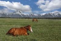 Teton Horses Fine Art Print