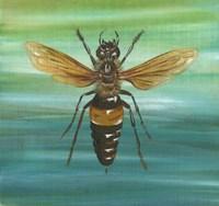 Honey Bee Fine Art Print