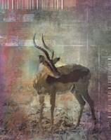 Africa Antelope Fine Art Print