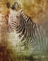 Africa Zebra Fine Art Print