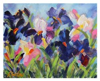 The Iris Show Fine Art Print