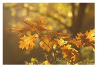 Autumn Light Fine Art Print