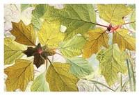 Golden Oak Fine Art Print