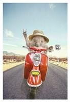 Hedgehog Traveler Fine Art Print