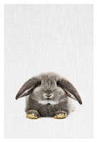 Rabbit II Fine Art Print